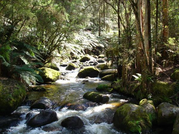 Ecoturismo, río