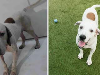 Fotos antes e depois mostram que os abrigos de animais precisam de bons fotógrafos
