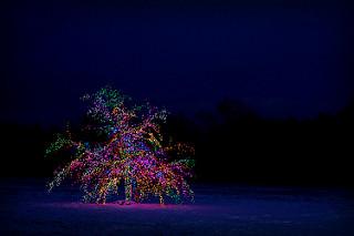 árbol de exterior iluminado con colores