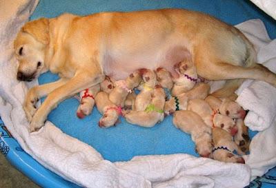 Imagenes de Perros - Alimentos prohibidos para nuestro can