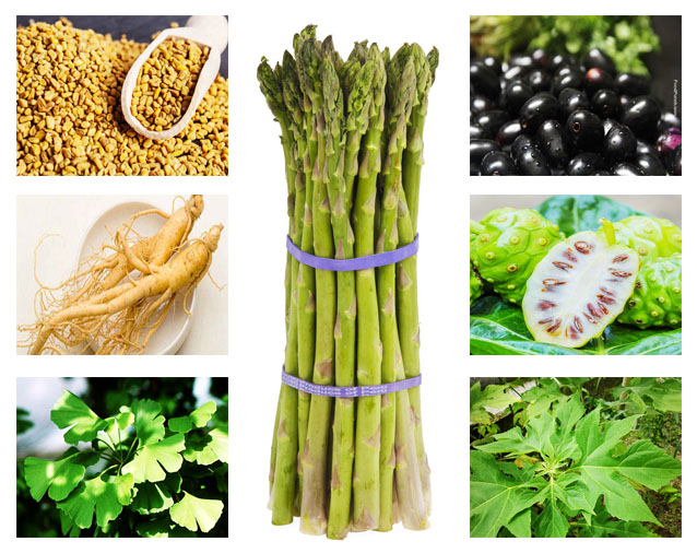 herbal tradisional alami untuk penyakit diabetes