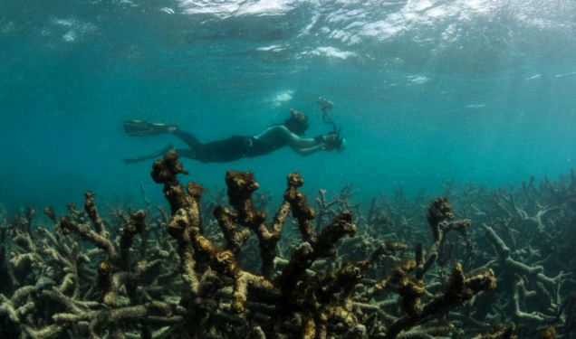 Humanity Driving 'Unprecedented' Marine Extinction