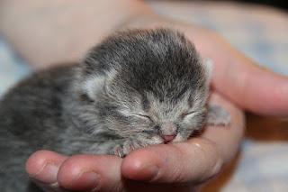 Cara Membuat Kucing Jinak dan Nurut Kepada Kita