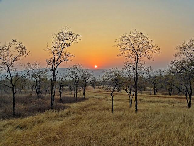 Sunrise in Panna National Park