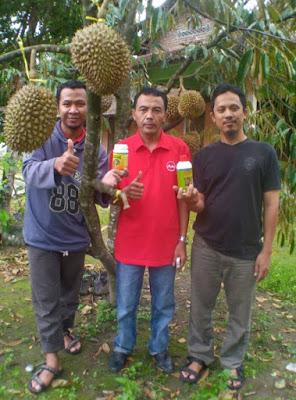 Pupuk Durian  Agar Berbuah Lebat