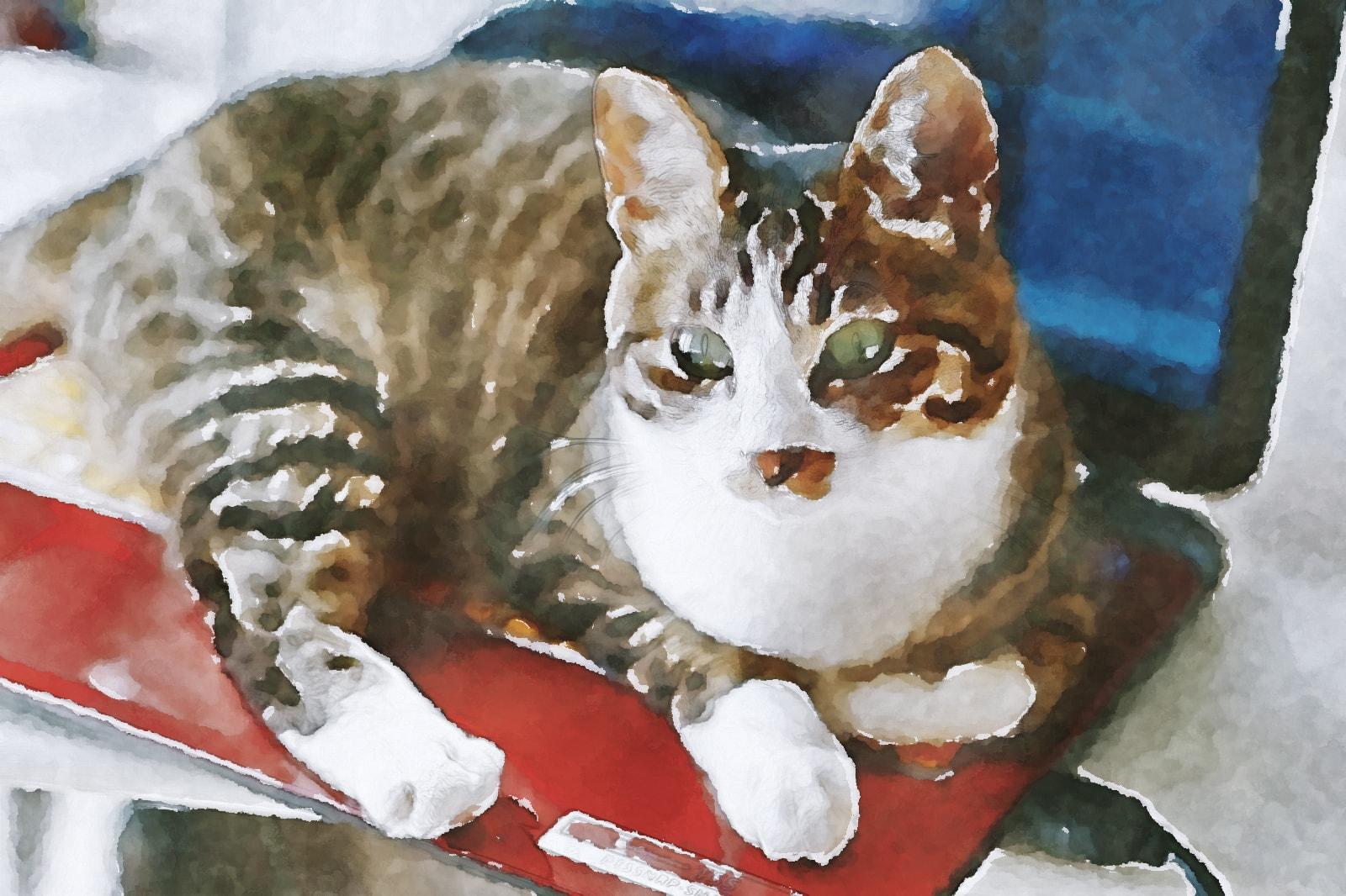 水彩画のネコ