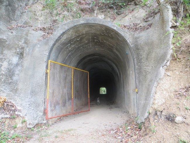 Собака бежит в туннель