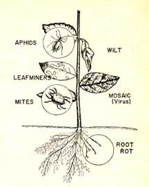 Pestisida sistemik