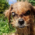 Incredible Pictures  Depict The Transformation Of A Dog 8 Months After It Was Rescued