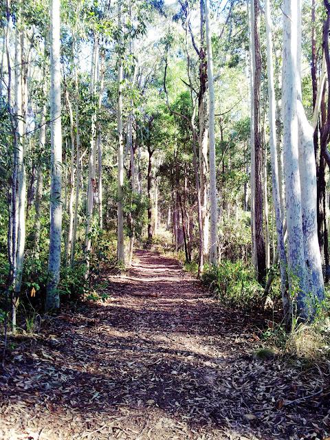 Dry schlerophyll forest walk