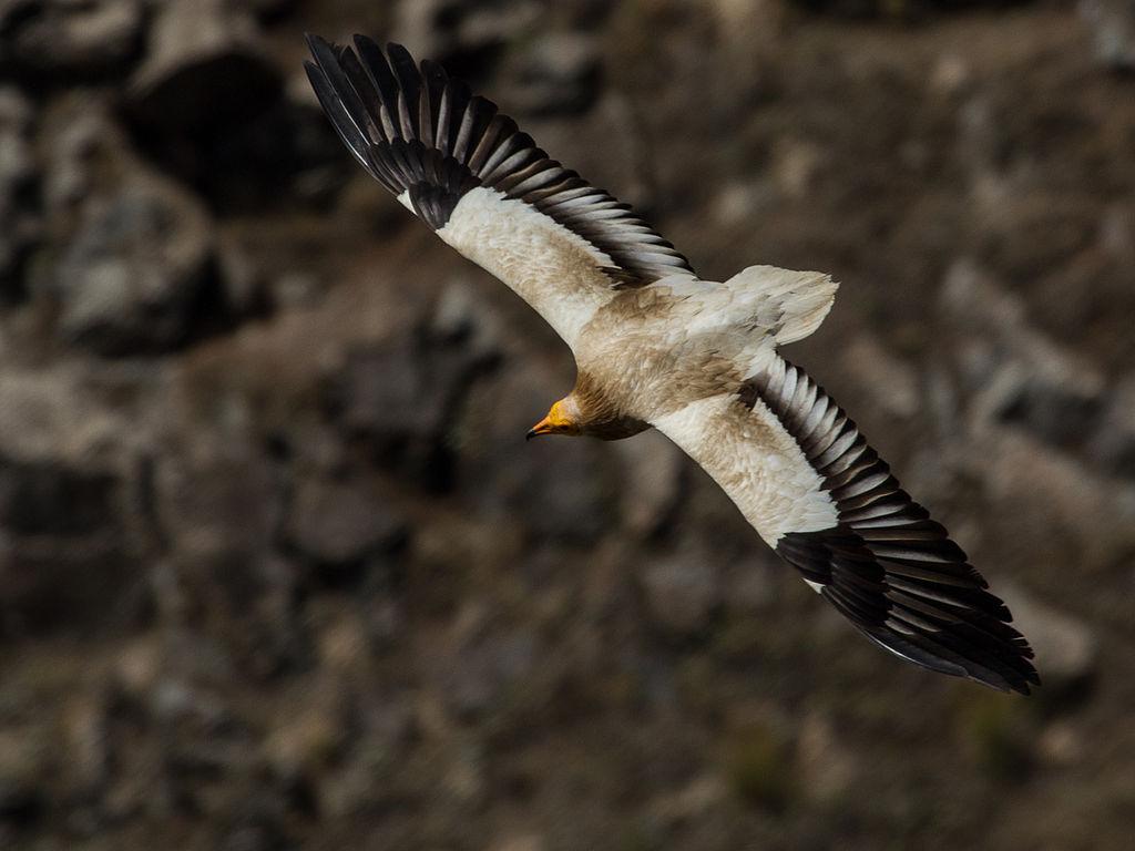 Πώς να πάρει ένα μεγάλο πουλί φυσικά