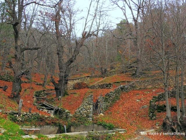 Otoño en el Castañar de Casillas, Valle del Tietar, Sierra de Gredos