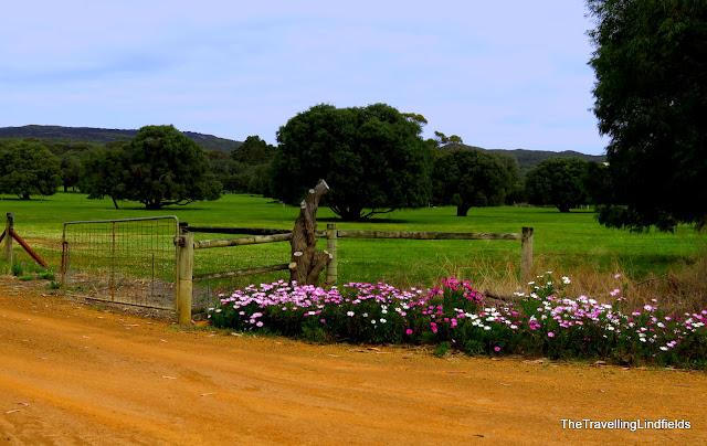 Wildflowers, Western Australia