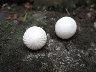 Sepasang Batu Permata Mustika Kelapa Langka