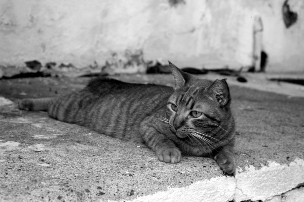 puerto rico hurricane cats