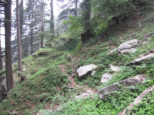 forest kalatop