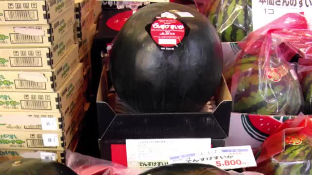 12 MOST EXPENSIVE FRUITS IN THE WORLD Densuke Watermelon