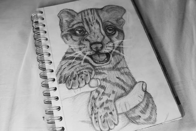 cheetah cub drawing