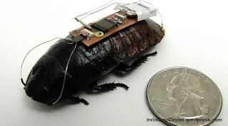 perbandingan ukuran kecoa robotic dengan uang logam