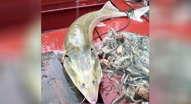 Nelayan Terkejut Tertangkap Ikan Misteri Lagi Ganas