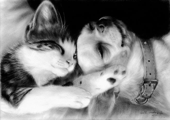 01-Cat-and Dog-Sleeping-Danguole-Serstinskaja-Animal-Dry-Brush-Technique-Paintings-www-designstack-co
