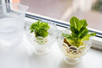 Jasa Tukang taman surabaya kebun sayur sederhana