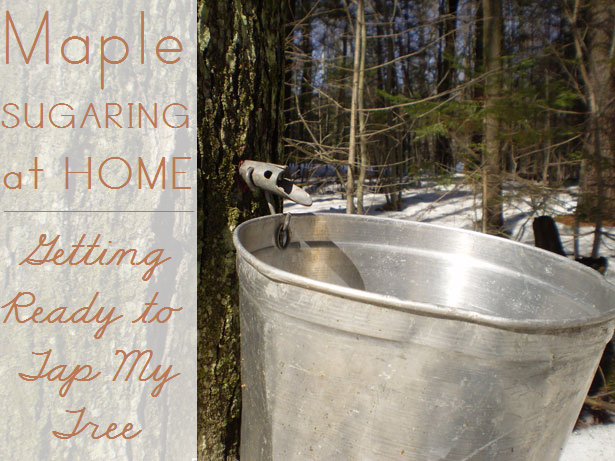 Maple Sugaring at Home