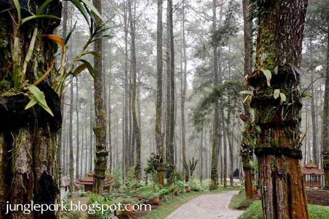 Tempat Wisata Outbound di Lembang Bandung