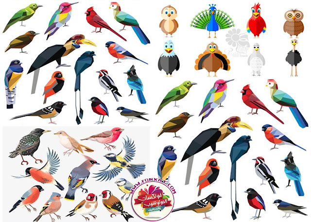 Cartoon vector illustrations of various birds, owls, peacocks, pigeons, parrots, ostriches
