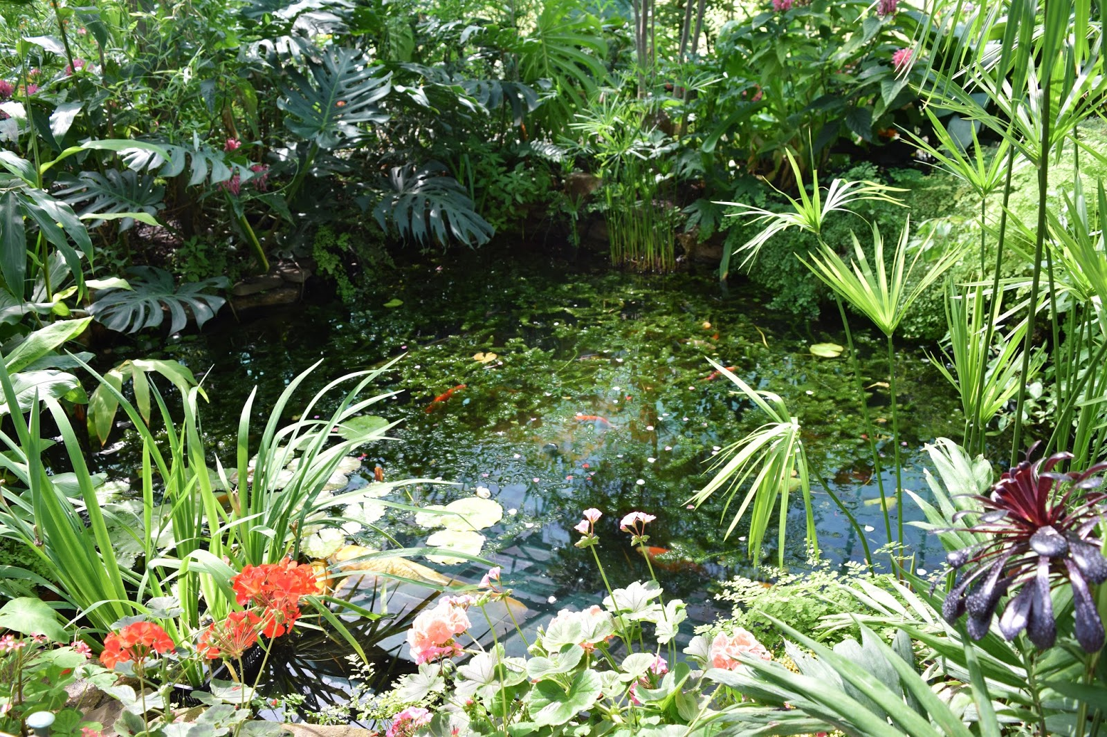 the fish pond inside the butterfly farm. The pond is surrounded by greenery.