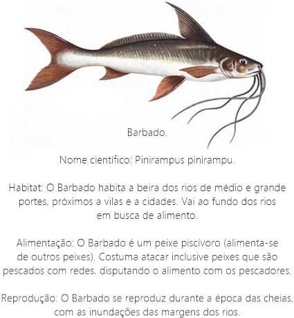 Peixe-Barbado