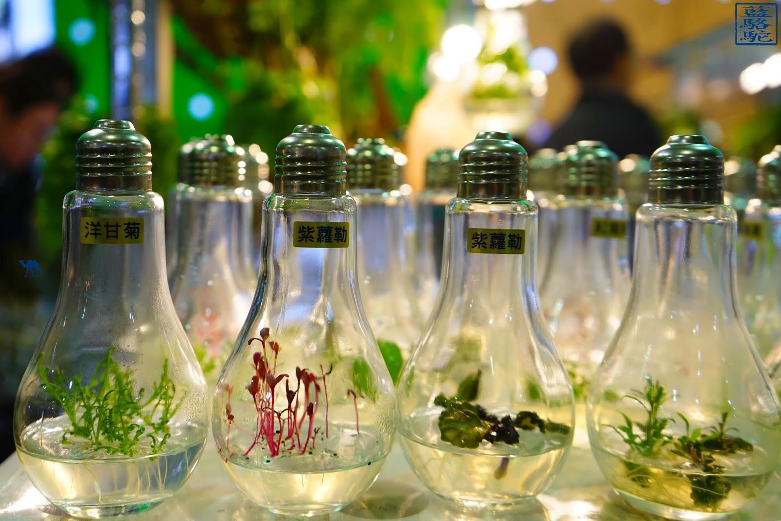 Le Chameau Bleu - Plantes dans des ampoules au marché au fleur de Taipei - Taiwan