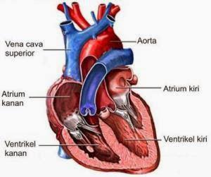 Makanan Sehat Untuk Jantung Manusia