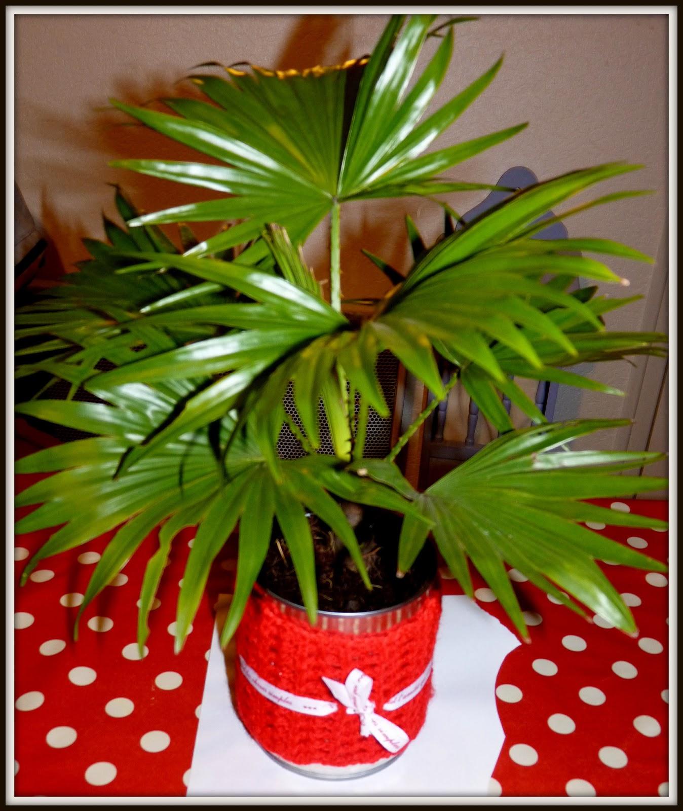 mon blog un joli cache pot r cup pour offrir un mini palmier. Black Bedroom Furniture Sets. Home Design Ideas