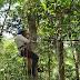 Waterstress bij bomen goed te meten