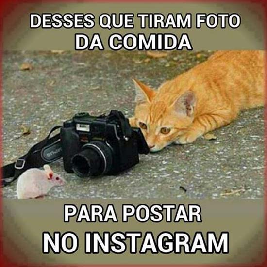 Frases para Facebook divertidas gatos