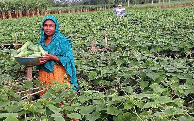 বকশীগঞ্জে সবজি চাষ করে ঘুরে দাঁড়িয়েছেন হালিমা বেগম