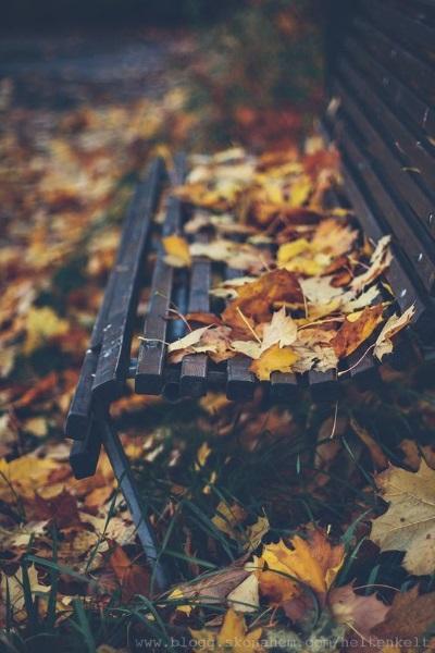 l'automne banc feuilles