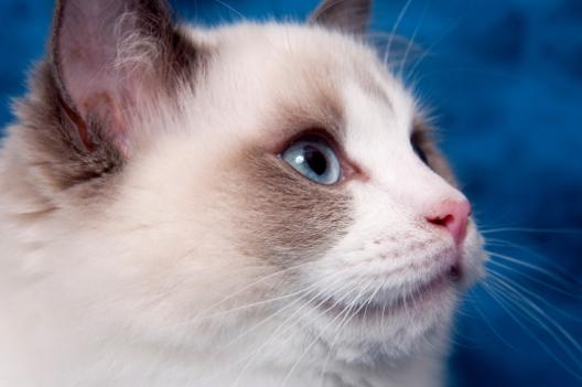 Do czego kotu potrzebne są wąsy?