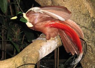 burung tercantik dan terindah