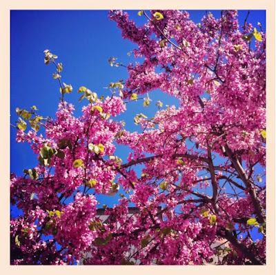 Viernes vitales primavera Madrid