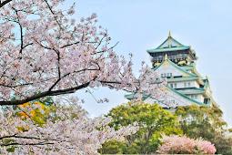 5 Lokasi Terbaik untuk Menikmati Bunga Sakura di Jepang