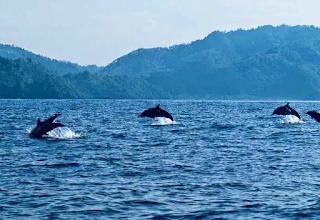 Teluk Kilauan Lampung
