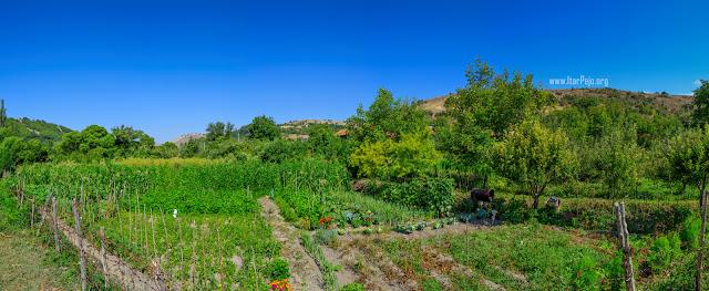 Gardens - Gradeshnica village Mariovo