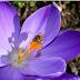 Μελισσοκομικό-Περιβαλλοντικό Συνέδριο Σαρωνικού 2016