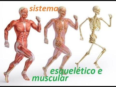 https://www.todamateria.com.br/sistema-locomotor/