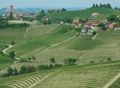 Vineyards around Barbaresco, Piedmont, Italy