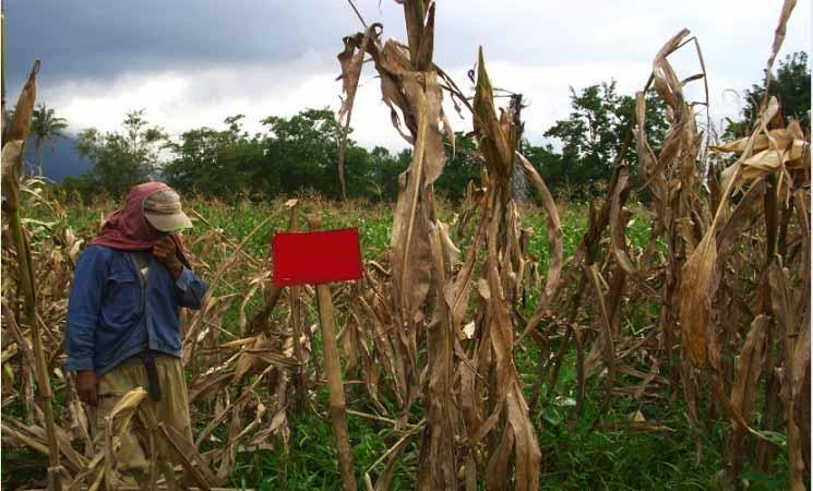 Tujuan dan Manfaat Agroforestri
