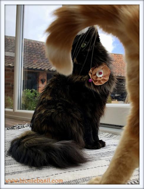 Amber Photobombs Pandora #2 @BionicBasil® Feline Fiction on Fridays