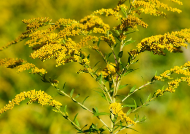 INTERNATIONAL RAGWEED SOCIETY SUPPORTS YOUNG RESERACHERS